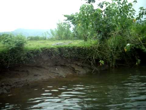 trekking a crocodile on vashishti river in konkanfriday