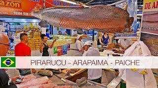 PIRARUCU - ARAPAIMA - PAICHE