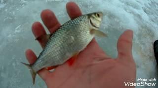 Сезон зимней рыбалке продолжается! Все уже копают, а мы спешим на лёд!
