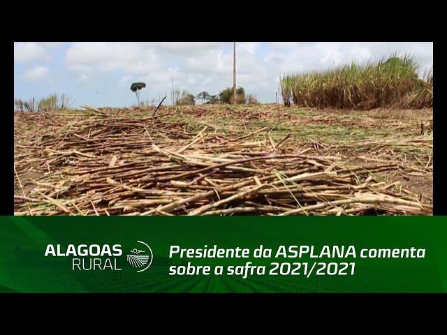 Cana-de-açúcar: Presidente da ASPLANA comenta sobre a safra 2021/2021