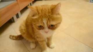 Рыжий котик Мартыша