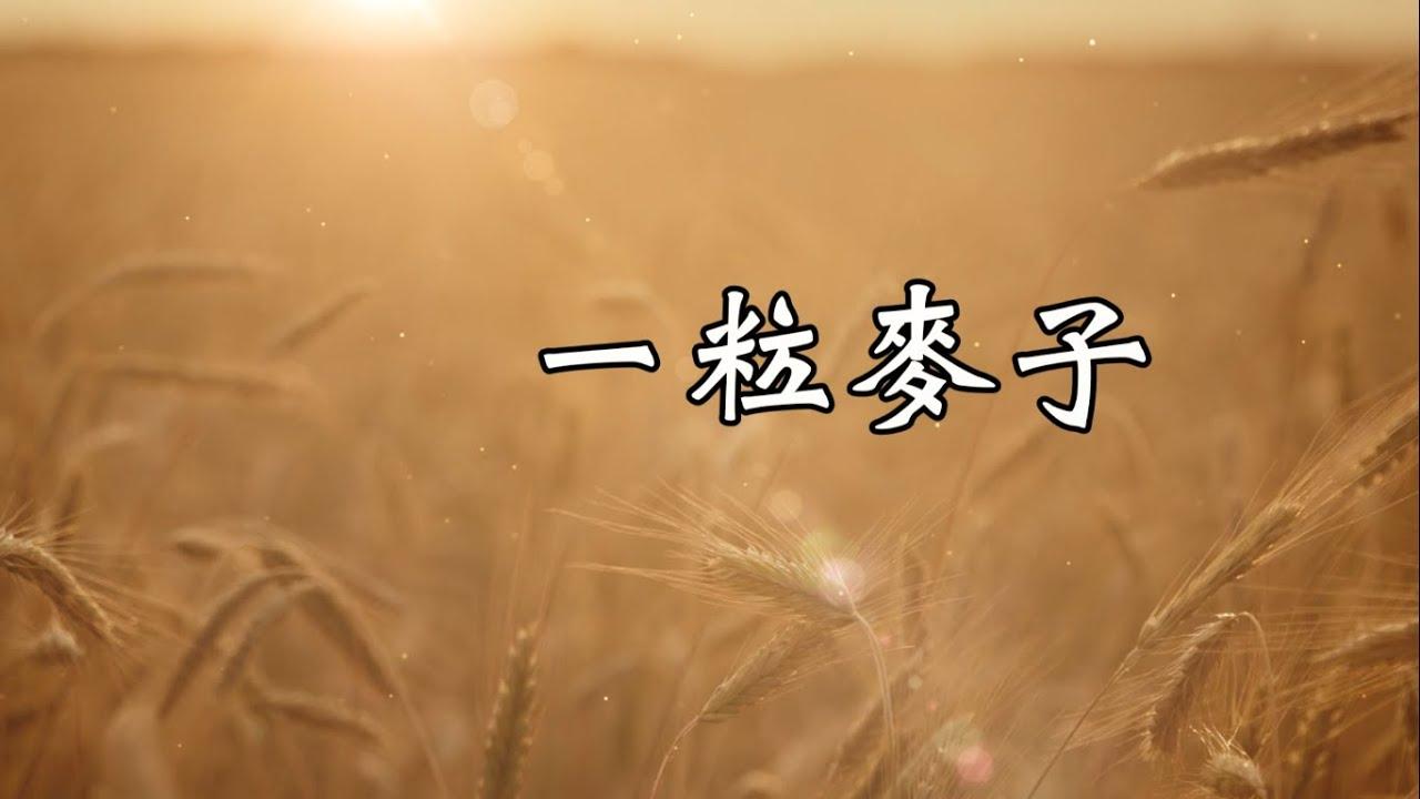 一粒麥子-小羊詩歌(一粒麥子)