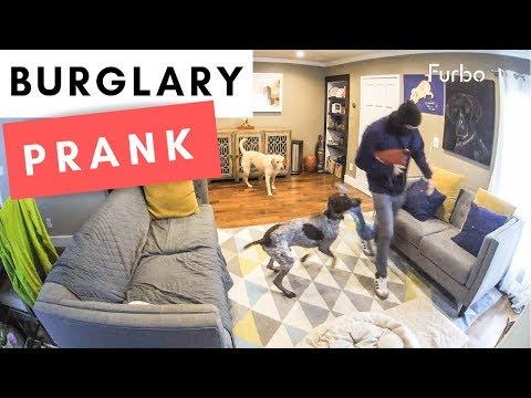 Dogs vs Intruder - WAIT FOR IT!!