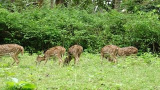Places to visit in Madikeri, Coorg