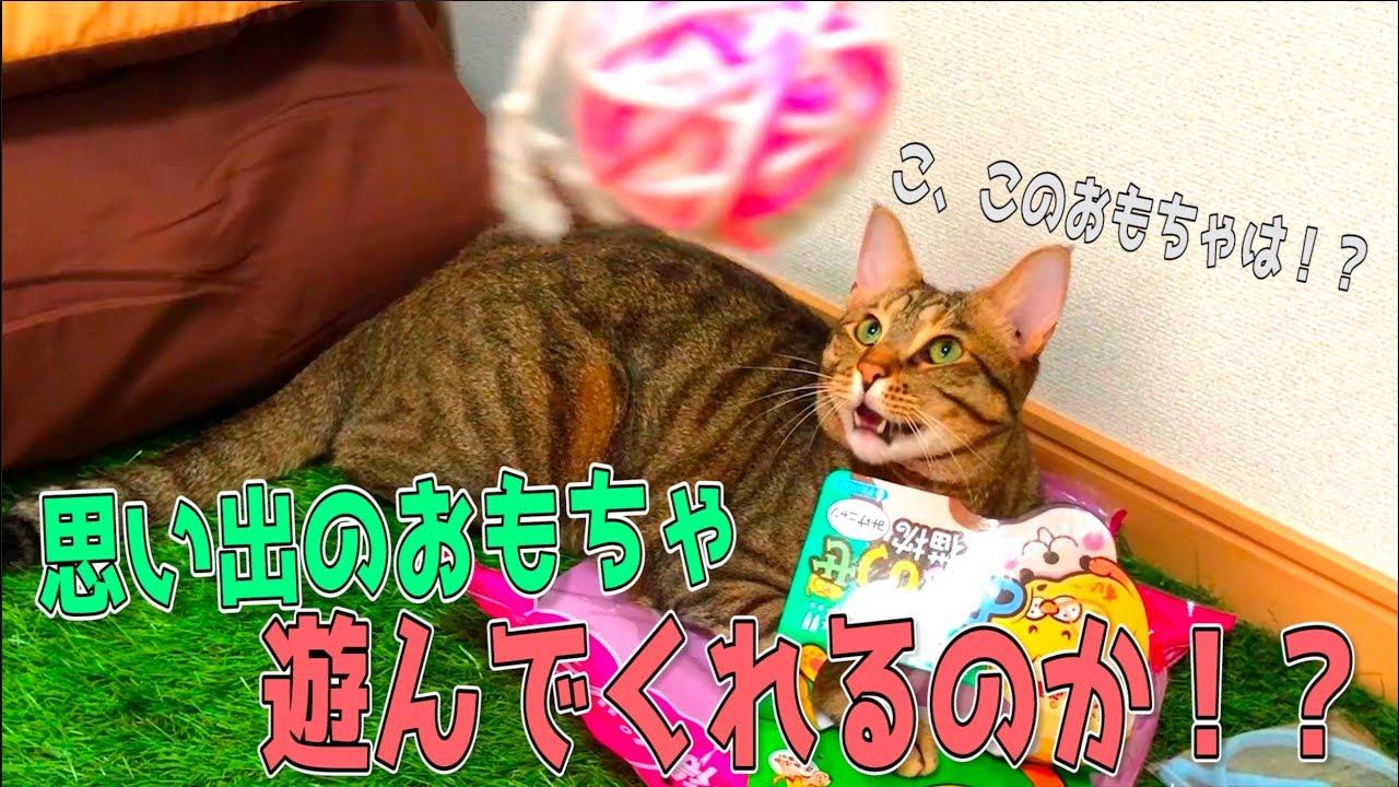 子猫時代の思い出のおもちゃで猫たちは再び遊んでくるのか…!?