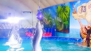 ☆ Пираты карибского моря шоу дельфинов. Дельфинарий. Дельфины. Pirates of the Caribbean - Dolphins.