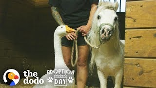 Rescued Goose, Mini Horse Are Inseparable - Watch Them Get Adopted Together | The Dodo Adoption Day