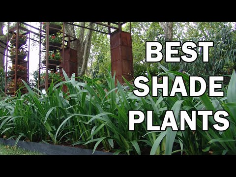The Top 10 Shade Plants - Ozbreed