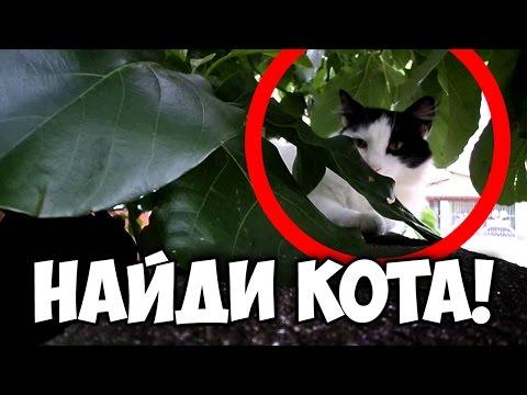 Игра  Найди кота  ^.^ Найдите сиамского кота Басё.