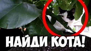 Найди кота, часть 8 🐈 БУДЬ В КУРСЕ TV