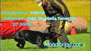 "MR1 ""Mafia"". Podzubanjva Valeriia Mondioring cat. 1 Doberman Fidel Sky Stella Tamerlan 117 points"