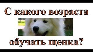 видео с какого возраста дрессировать щенка?