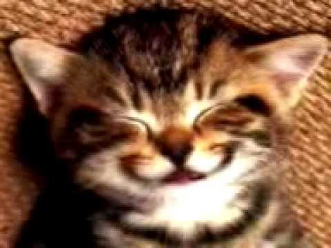 Animated Cat Wishing Birthday