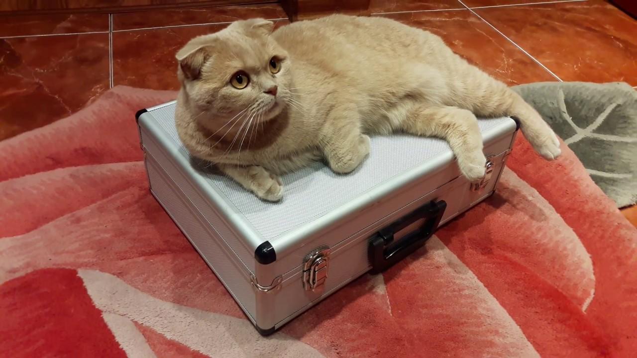 Видео музыкальные кота