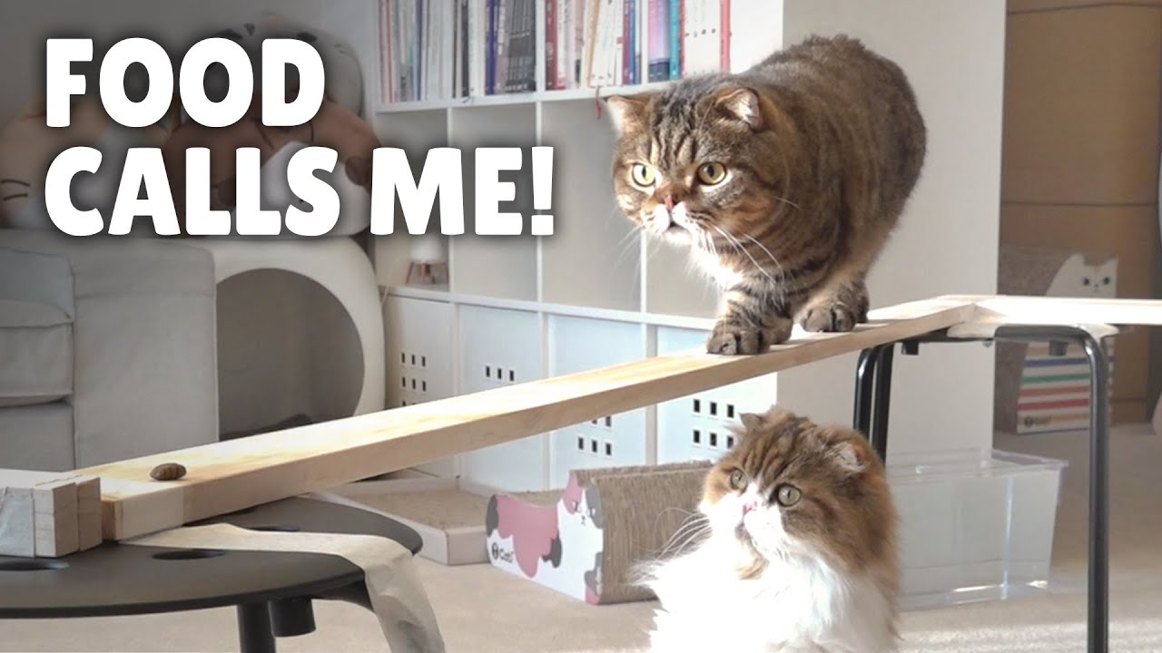 Cat Bridge Challenge! Stay Steady! | Kittisaurus