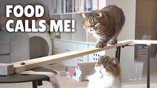 Cat Bridge Challenge! Stay Steady!   Kittisaurus