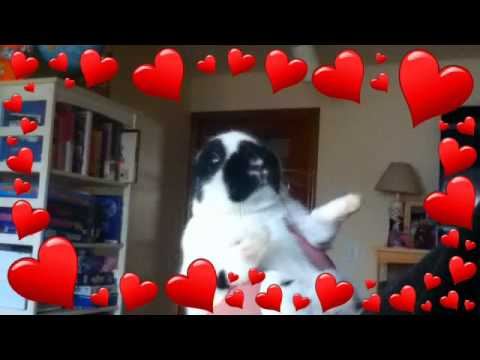 Tux (11 month old bunny) Dancing to Caddyshack Theme Song
