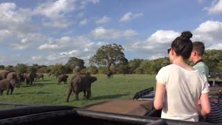 Minneriya Elephants Sri Lanka