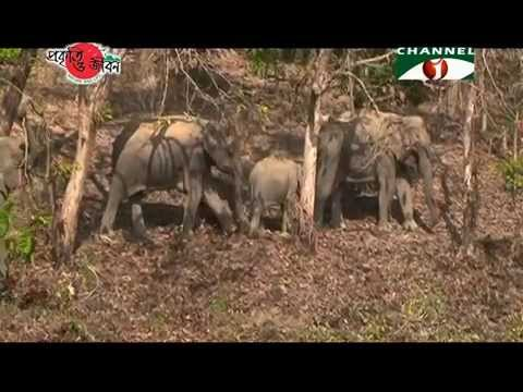 Nature and Life - Episode 170 (Endangered Mammals of Bangladesh) Part-1