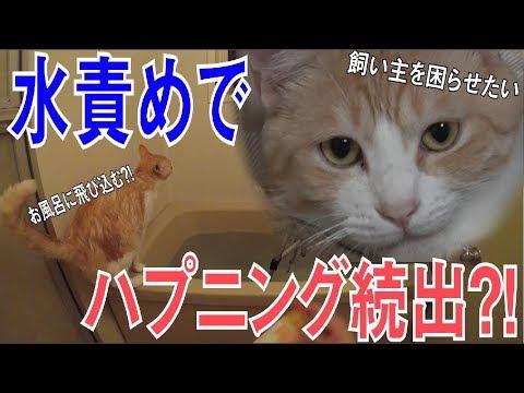 飼い主目線で猫を水責めしてたら猫がお風呂に飛び込んだ?!