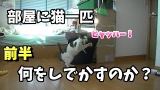 飼主がいない時、猫は何をしているのか?【前半】