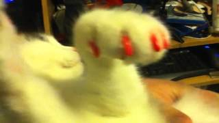 Антицарапки для кошек и собак - мягкие коготки (Защитные силиконовые колпачки на когти)