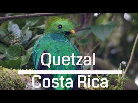 The Amazing Resplendent Quetzal