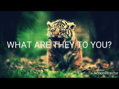 Tiger Poaching🐅