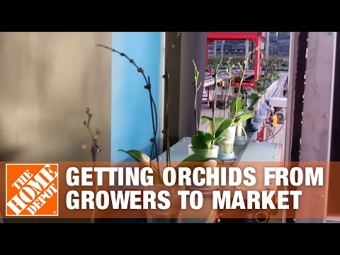 Getting Orchids from the Growers to Market Part 2 - The Home Depot