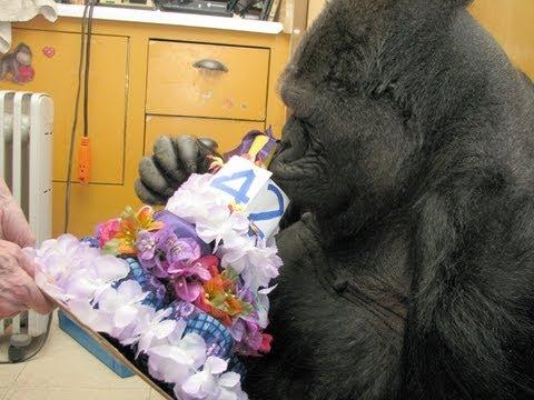 Koko's 42nd Birthday (July 4, 2013)