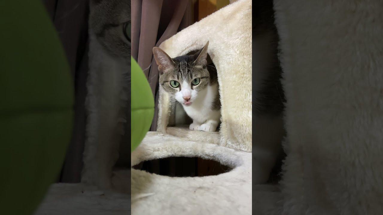 猫穴避け - Good morning from cats - #Shorts