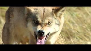 Тотем волка (2015) Трейлер