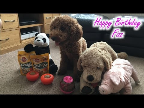 Happy 1st Birthday Fizz - Miniature Poodle