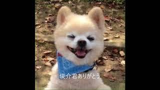 俊介君ありがとう 俊介くん 検索動画 15