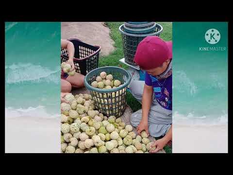 MY FRUIT DELIVERIES (PART 1)  Fruit Queen🍉🍉🍉