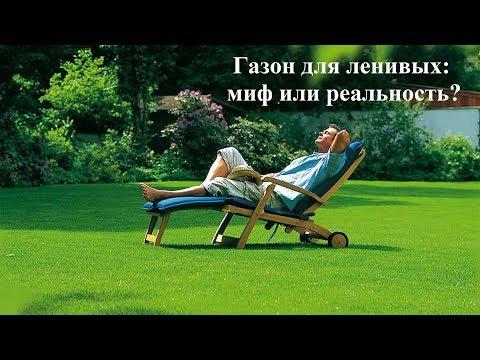 Газон для ленивых. Миф или реальность