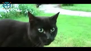 Download Gokil Habis!!! Eta Terangkanlah Versi Kucing PlanetLagu com