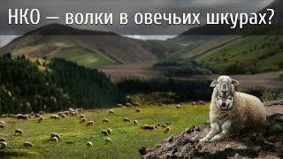 НКО — волки в овечьих шкурах?