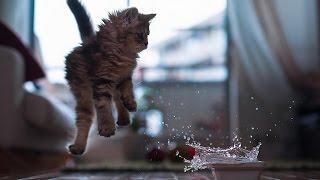 Видео приколы про кошек! Испуганные кошки Подборка №1.