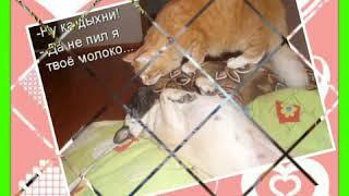 Смешно до слёз. Смешные картинки про котов.