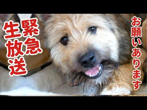 【緊急生放送】保護犬ポテに質問しよう放送!