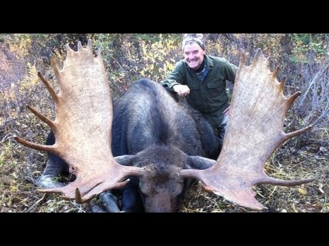 Moose Hunting In British Columbia