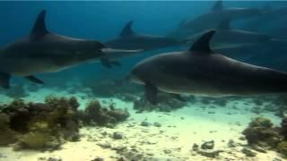 Дельфины, секс игры