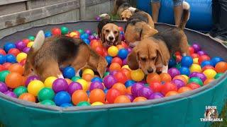 TOP 10 Beagle Dog Parties Ft. Louie \u0026 Marie