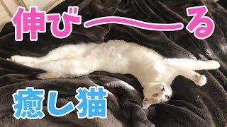 【疲れている人向け】猫と一緒にくつろぎたい人のための癒し動画