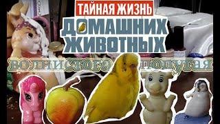 Тайная жизнь домашних животных - Волнистого попугая Чики! #Смешной попугай #Parrot