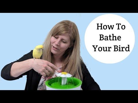 How to Bathe Your Bird 11 Ways!
