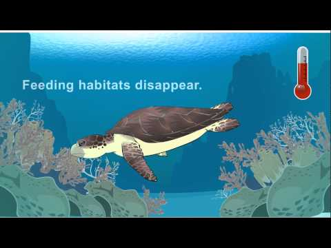 Climate Change Affects Sea Turtles