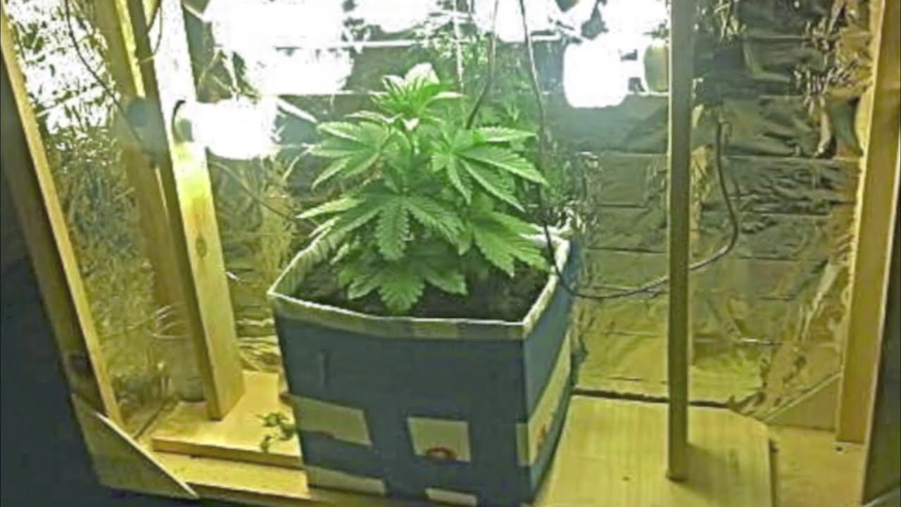 Indoor weed plant growth from 1 to 6 weeks youtube nvjuhfo Image collections