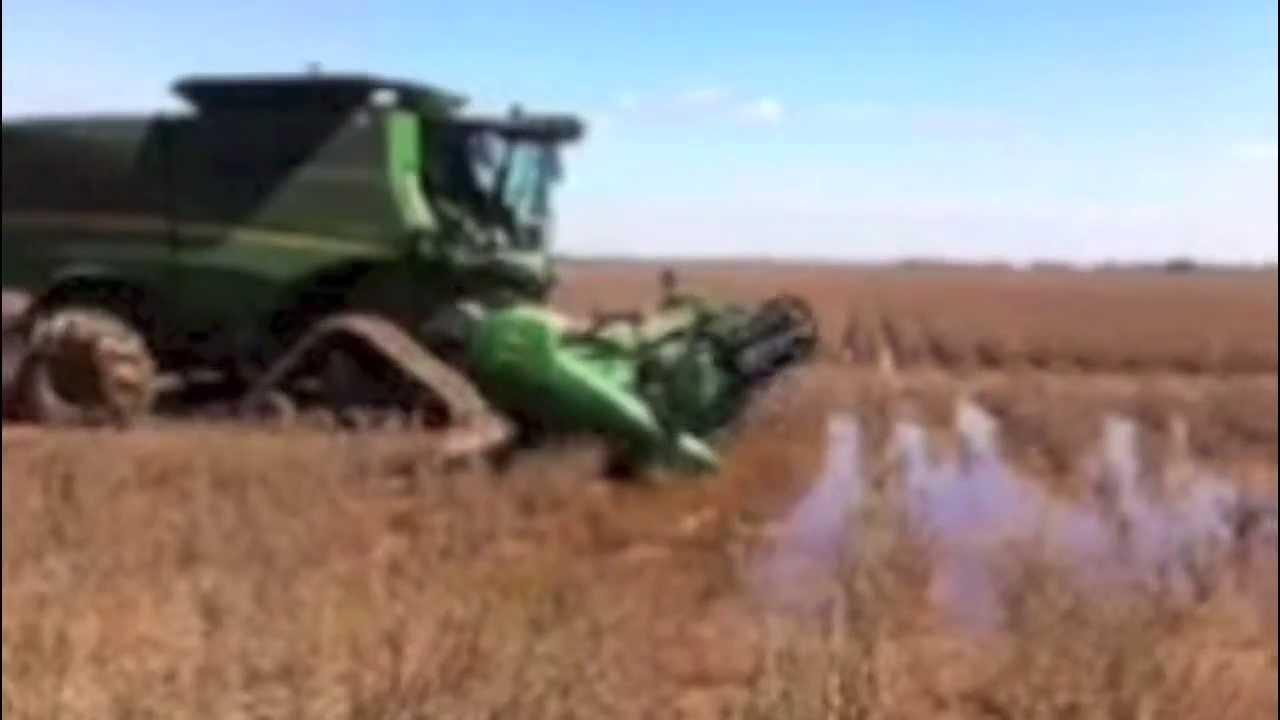 John Deere Combine On Tracks Harvesting Beans In Standing Water Wet Field Muddy